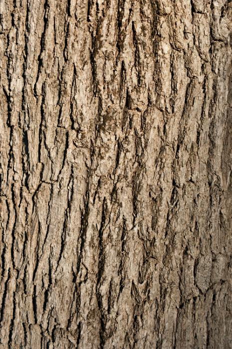 free image of tree bark background tree stump clipart old tree stump clipart free