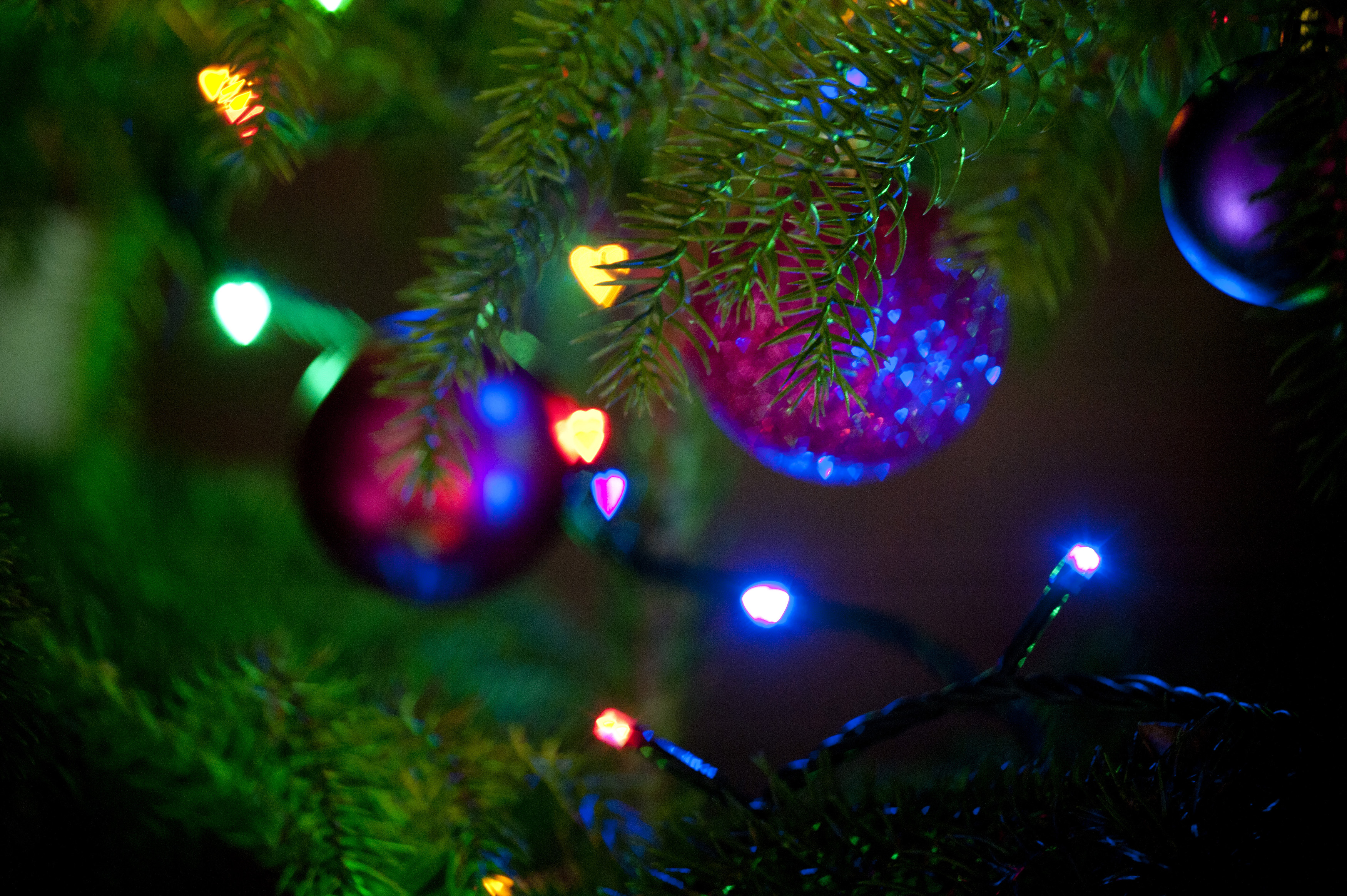 Free Image Of Close Up Christmas Tree Branches