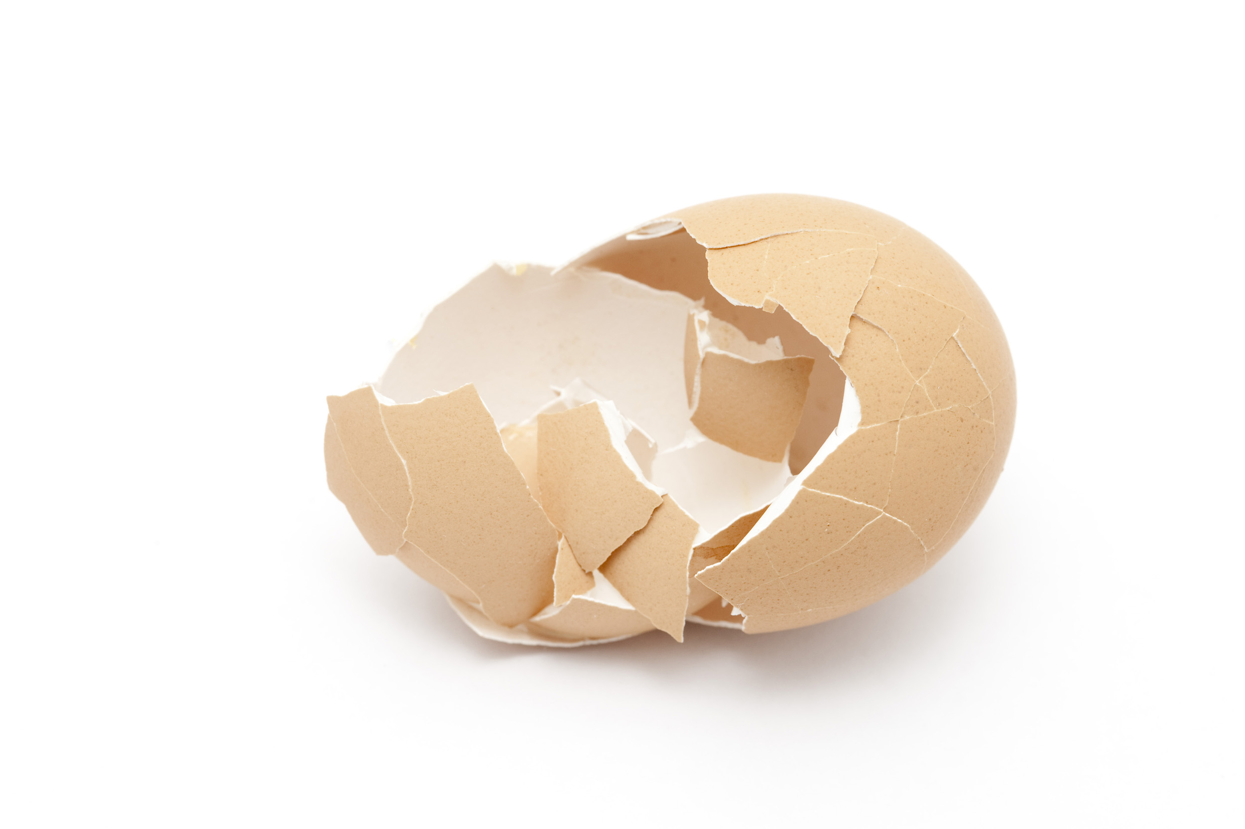 egg shell The function of an eggshell is to protect its contents from mechanical and  microbial attack while controlling the exchange of gasses through its.