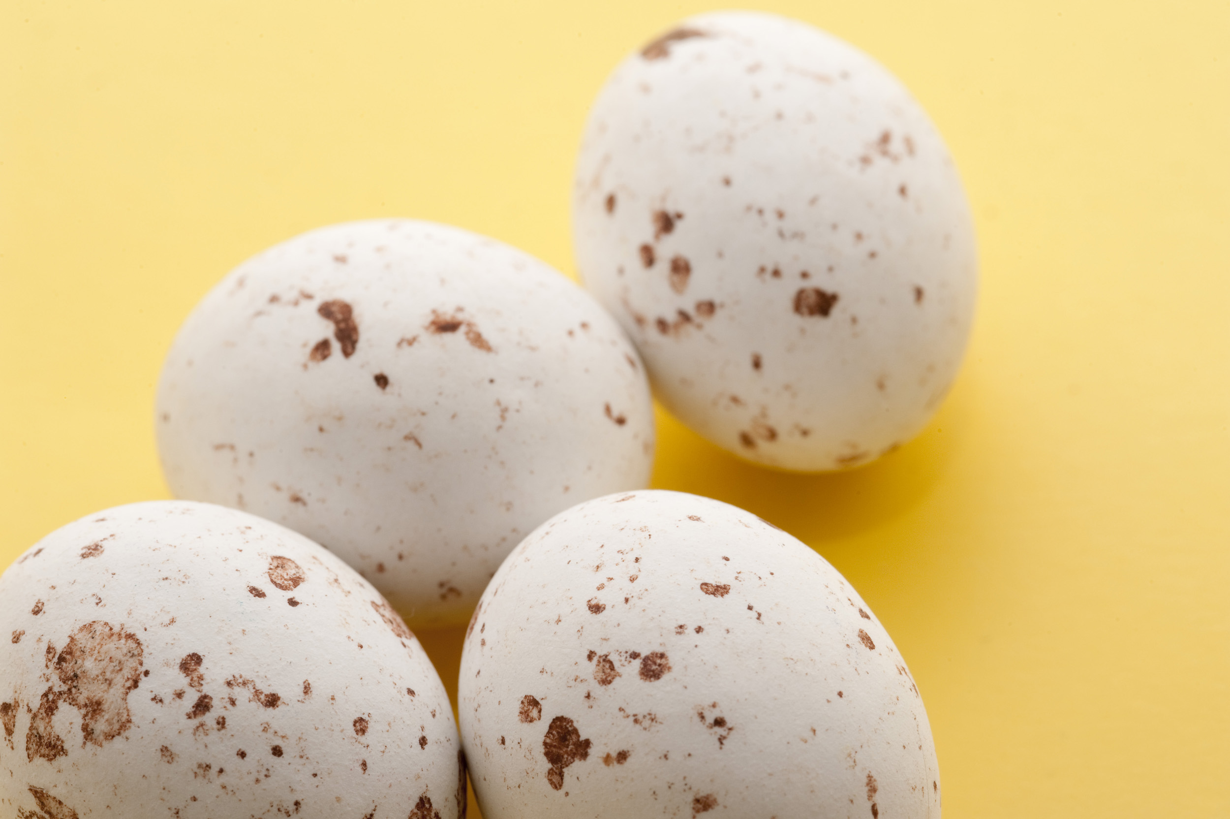 free image of speckled easter eggs
