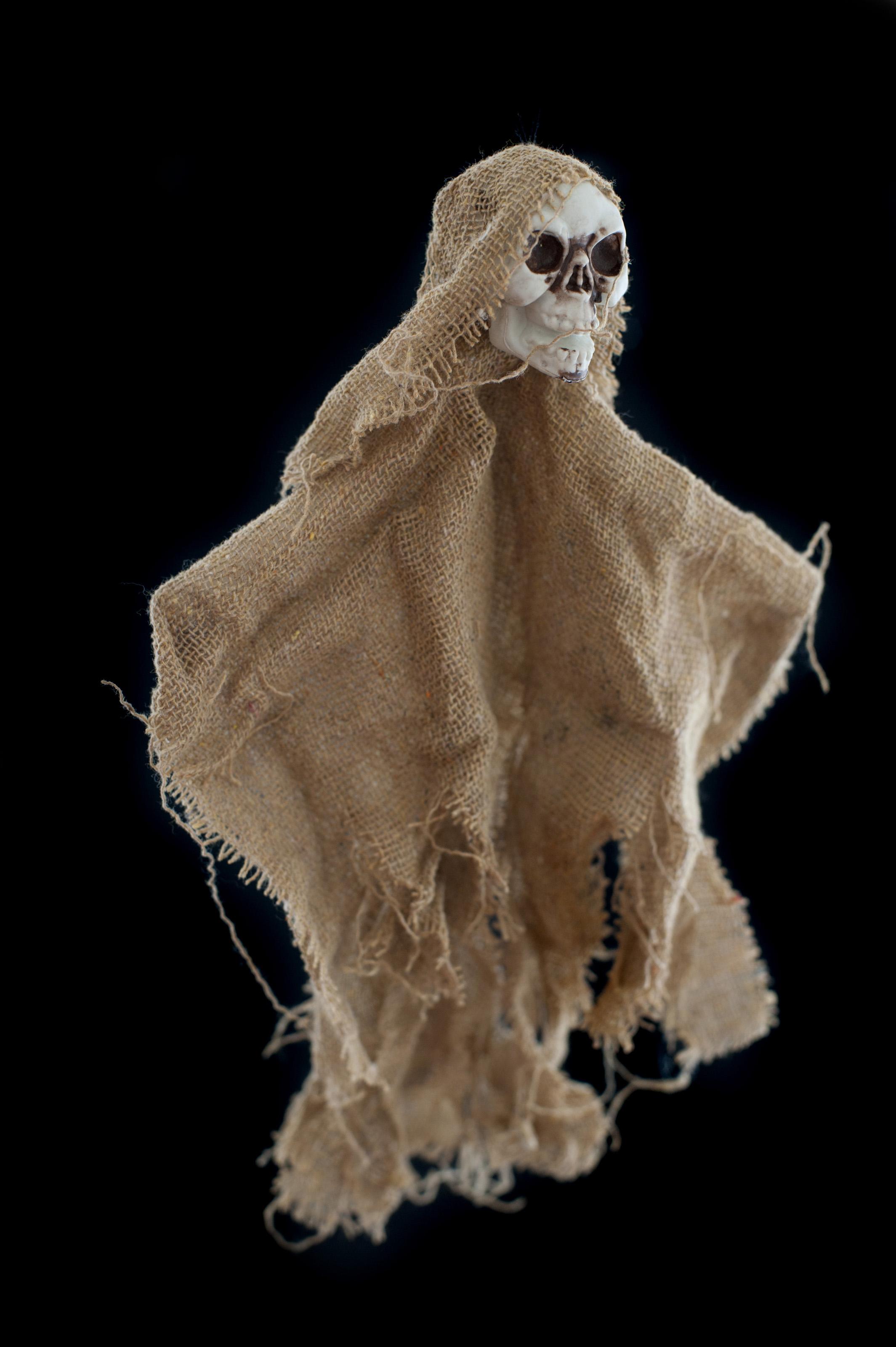 Free Image Of Rustic Halloween Skull Decoration