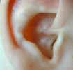 ear2327.jpg (377461 bytes)