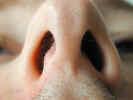 nose2329.jpg (489209 bytes)