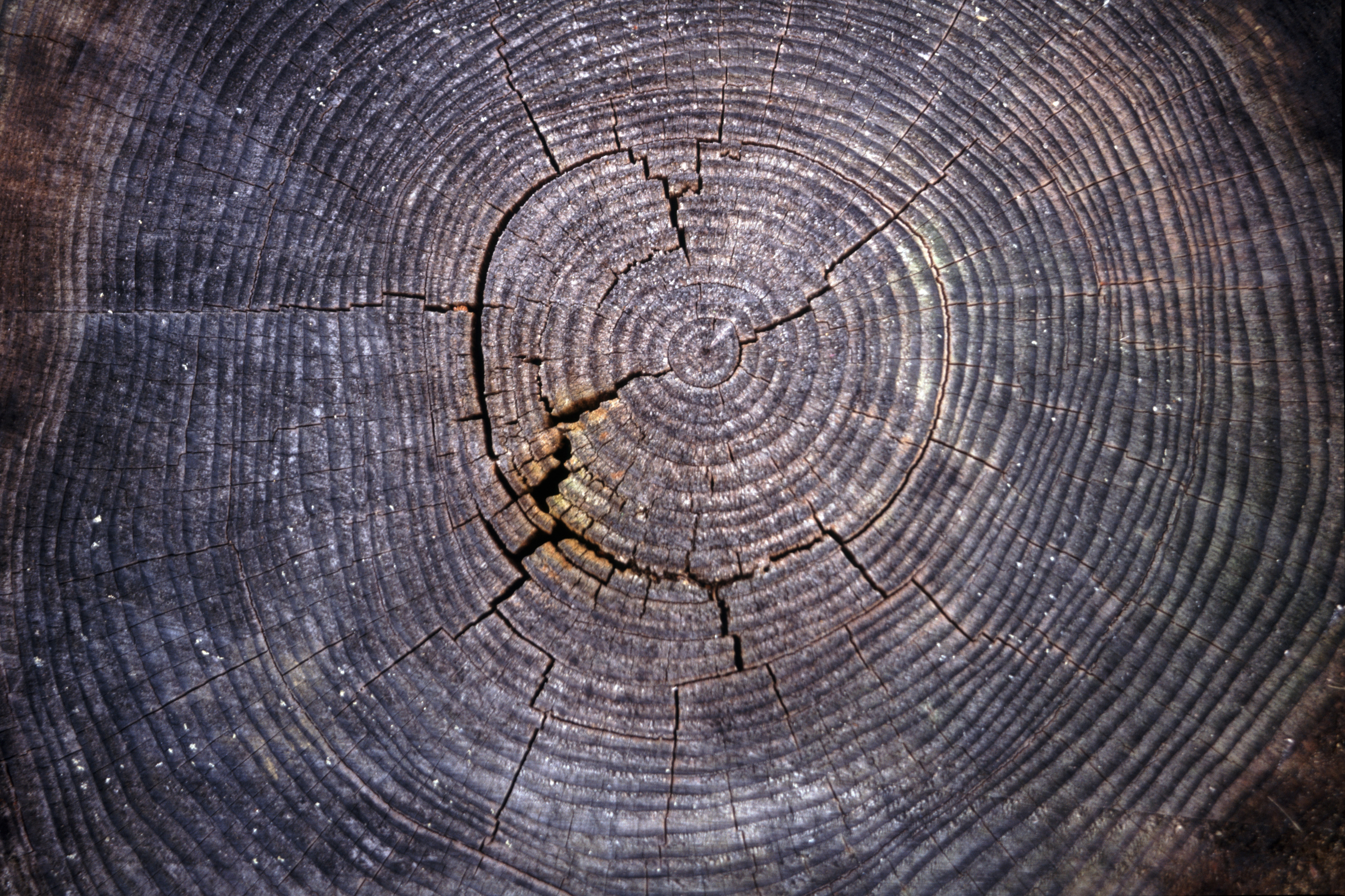compressed sar concentric of product tree rings padilla suomi artist photograph c digital