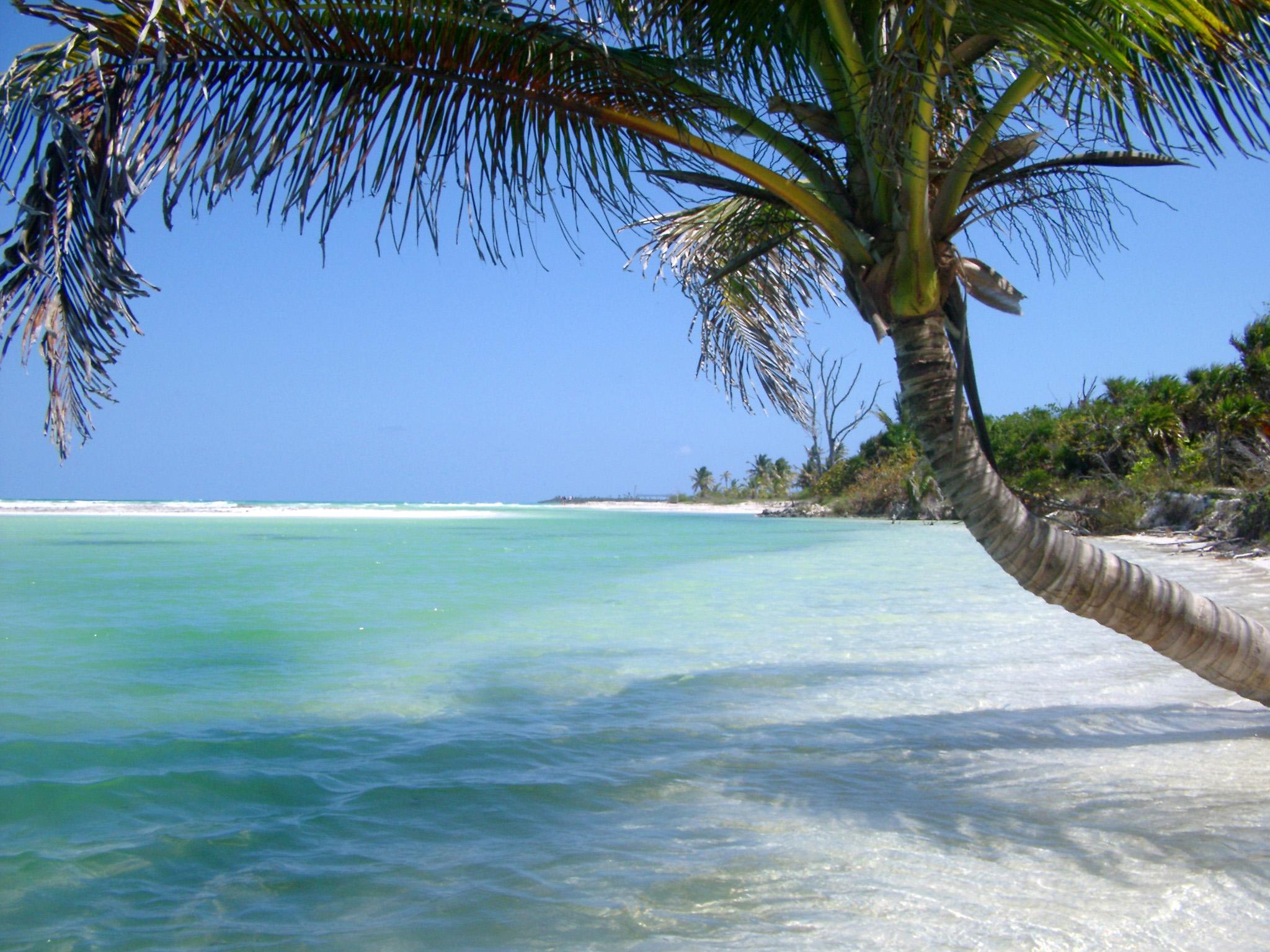 free image of idyllic tropical bech and palm tree