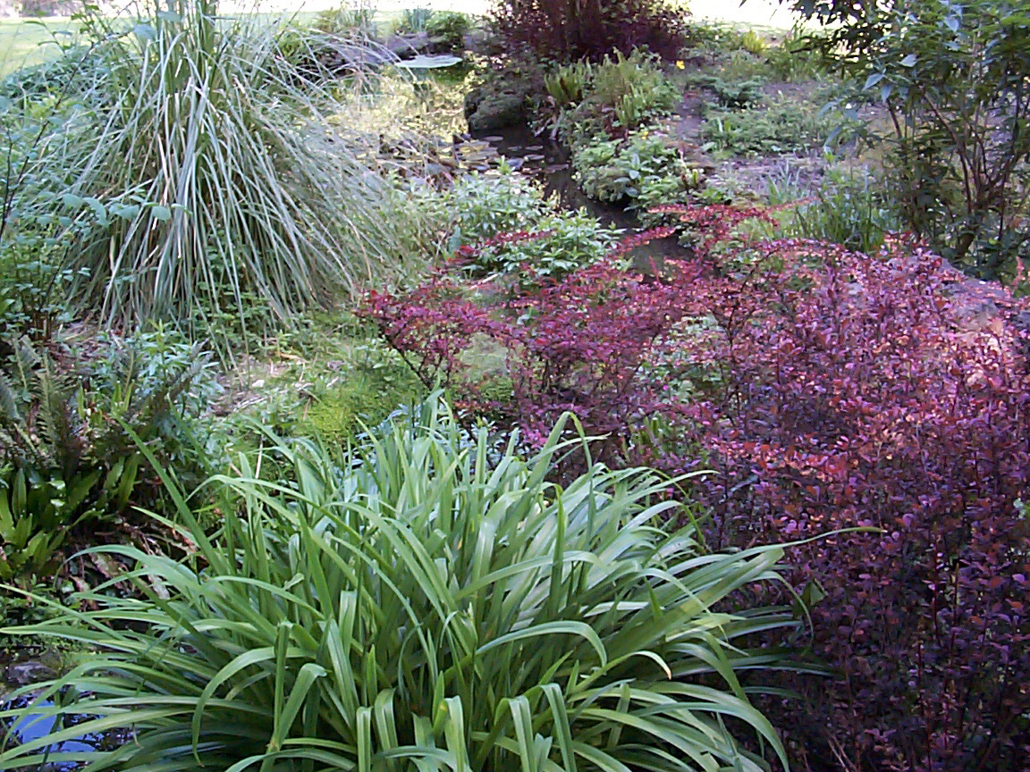 Free Image Of English Garden Shrubs
