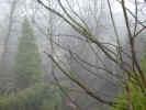 foggygarden4210.jpg (739418 bytes)