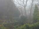foggygarden4212.jpg (858642 bytes)