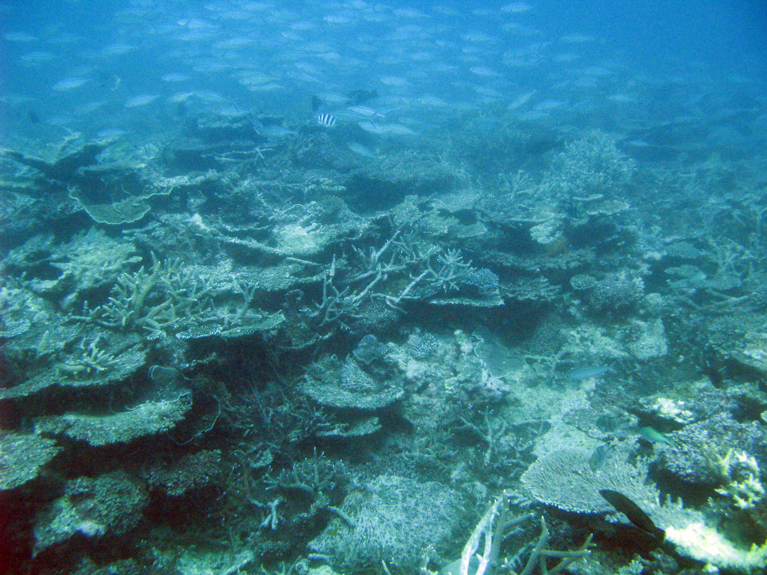 free image of coral underwater seascape