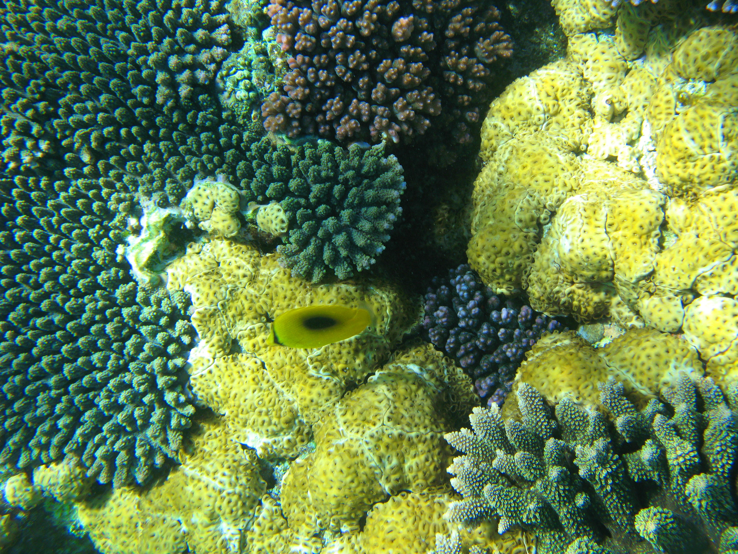 Coral reef fish yellow - photo#16