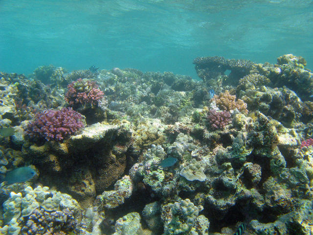 nature coral underwater landscape - photo #42