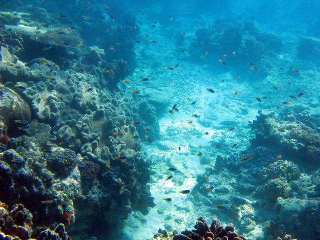 nature coral underwater landscape - photo #3