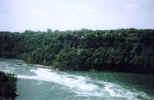 nature00054p.jpg (585910 bytes)