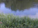 natureriver1379.jpg (695721 bytes)