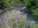 pond00023.jpg (149272 bytes)