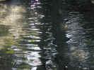 water0366.jpg (668589 bytes)
