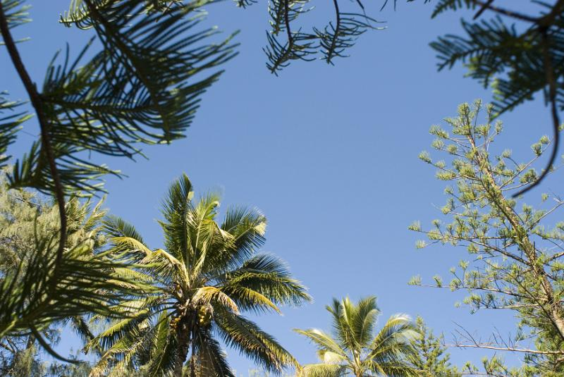 View from below looking up of assorted tropical trees framing a blue sky with central copyspace in a travel and summer vacation concept