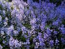 flora02030_dt800.jpg (205691 bytes)