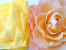 floralrose0672_dt800.jpg (67516 bytes)