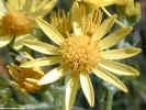 natureflower1343_dt800.jpg (81608 bytes)