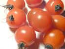 cherrytomatos0754_dt800.jpg (117699 bytes)