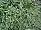 nature01495_dt800.jpg (171762 bytes)