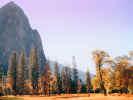 autumnaltreyosimitees_dt800.jpg (98924 bytes)